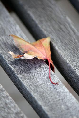 Fallen leaf on outside bench.