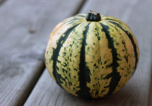 Close-up of a round yellow squash streaked with dark green.
