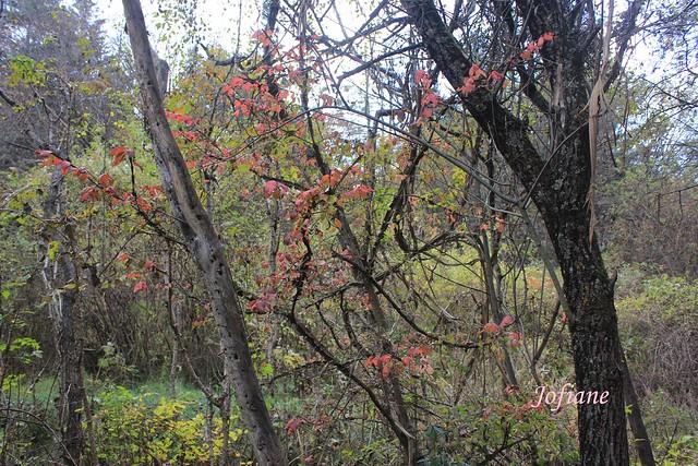 Jofiane - autumn leaves