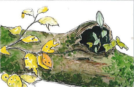 Watercolor Log