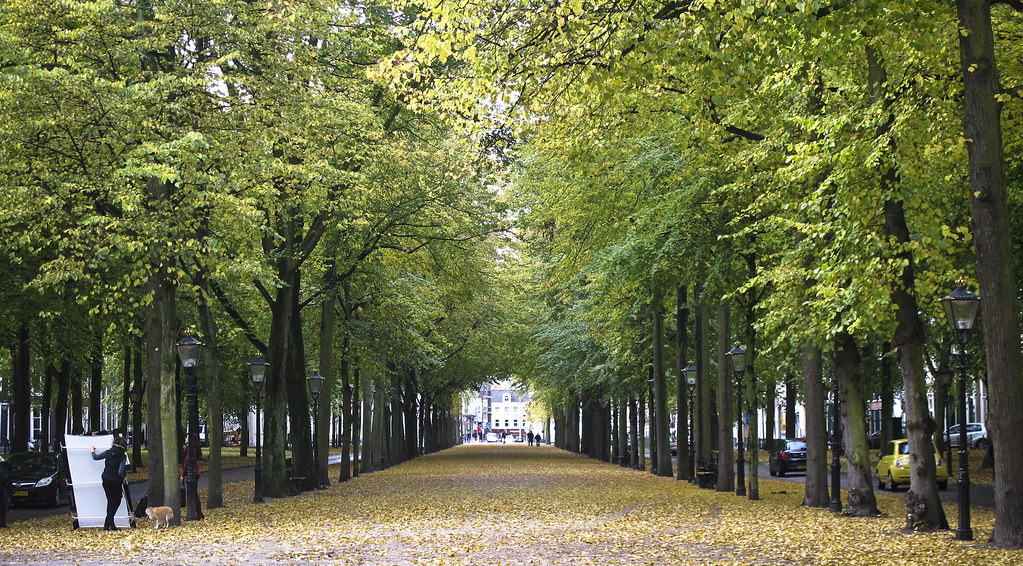 Autumn in DenHaag