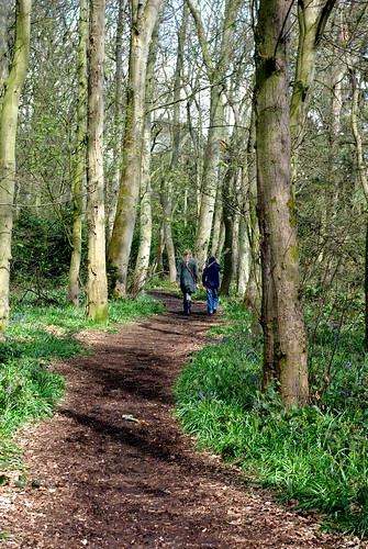 20120421-07_Down the Path through Bluebells in Cawston Woods - Rugby by gary.hadden