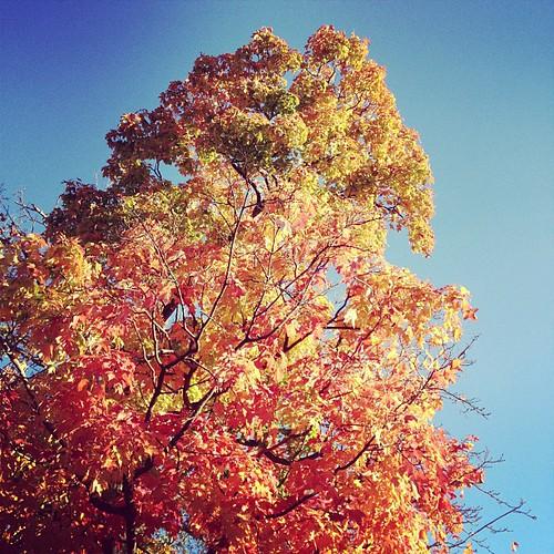 Autumn in Nashville.