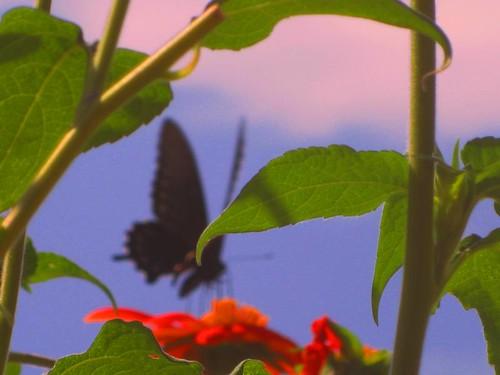 Dreams of Wings by Rosa Blue