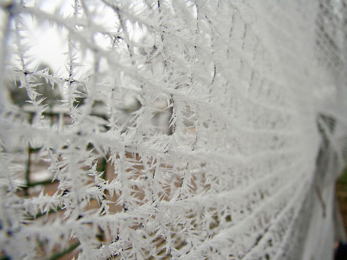 IceOnNetting