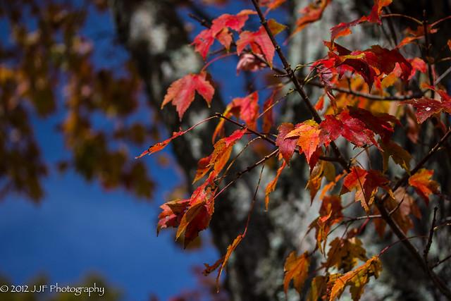 2012_Oct_17_Fall Foliage_012