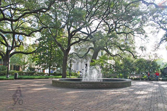 Savannah Scenes