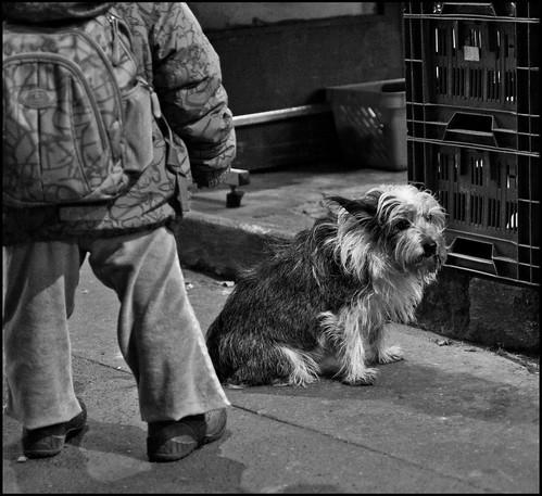 Prag / Hund / Dog