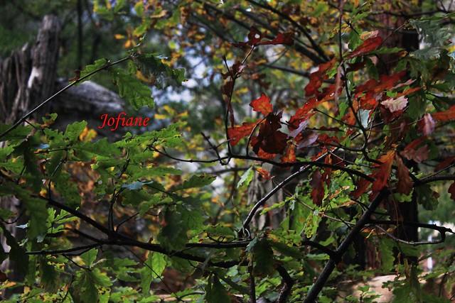 Jofiane - autumn leaves 2