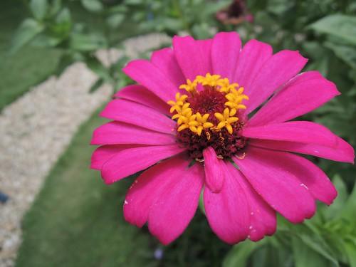 Nikon P310 Macro Flower by adi pratama 001
