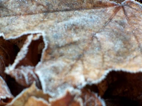 20121201-08_Frosty Leaf - Soft Focus_By Craig by gary.hadden