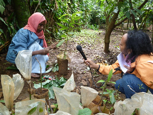 Women participate in fruit and coffee seedling production