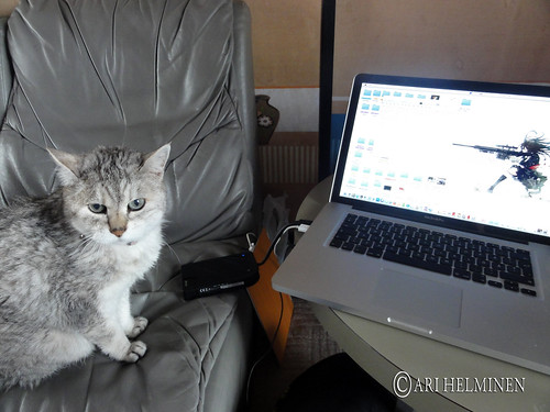 Cat with a macbook pro