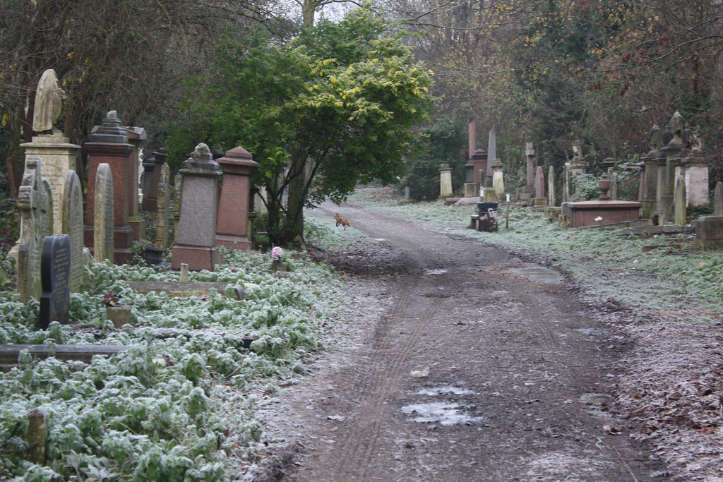 Abney Park Cemetery, fox running away. 1.12.2012