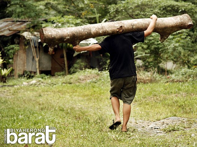 man carrying a log in Ditumabo Aurora