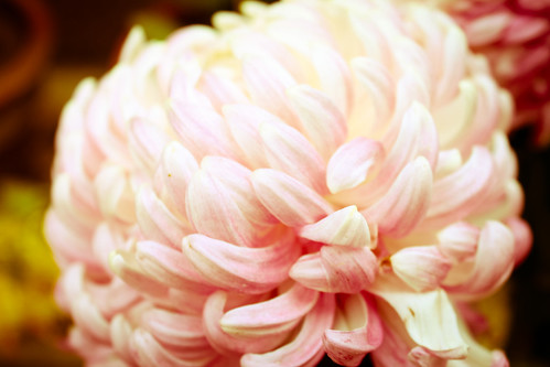 Roomflower2