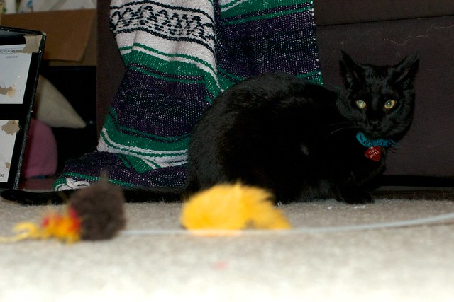 Luna Contemplates Birdie