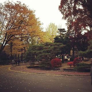 試験終了!銀杏並樹が綺麗に見える。