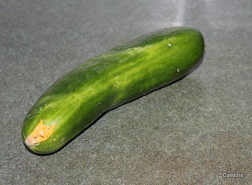 Fist Cucumber