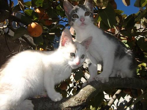 Adopção Mafra telefone 966 606 041. Muito grata by Irene Sarranheira