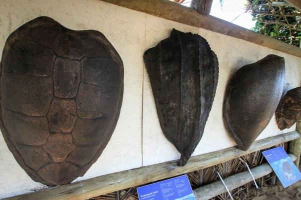 TAMAR Turtle Shells - Praia do Forte, Bahia, Brazil