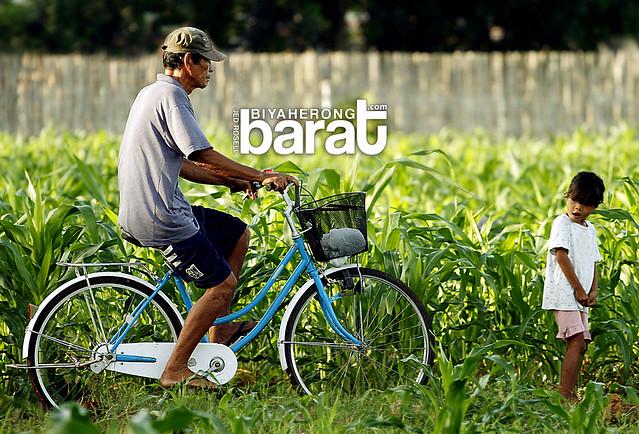biking in the ricefields madridejos cebu