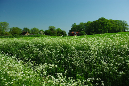 20120527-D_Vergeside flowers_Cawston nr Rugby by gary.hadden