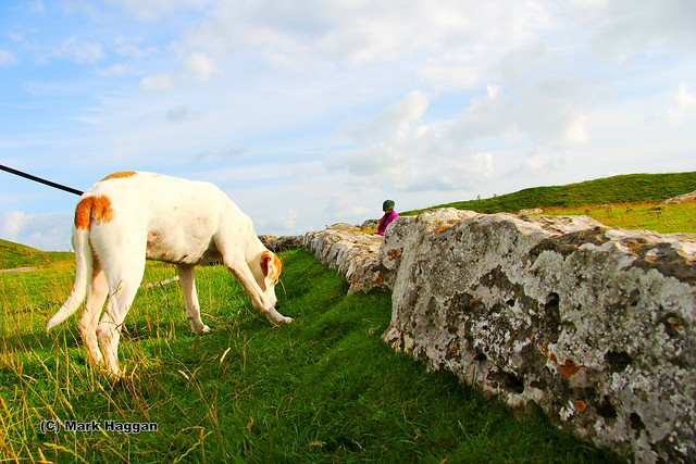 Berta explores Arbor Low Stone Circle