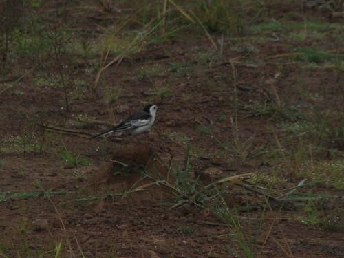 Bird on a hump by mdashf