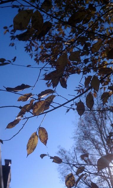 Pretty Trees 2