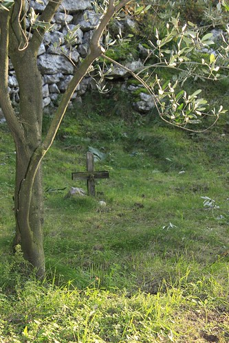 little grave under the olive tree