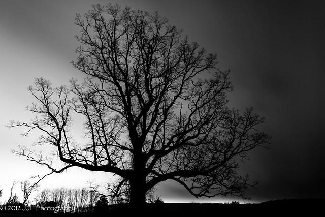 2012_Nov_12_Tree Silhoutte_023