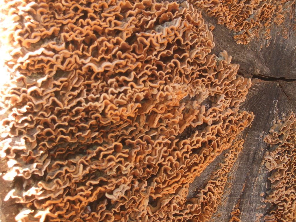 Log mould close up.