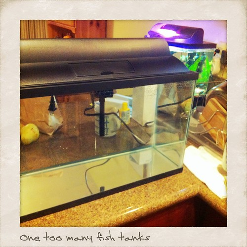 One too many fish tanks