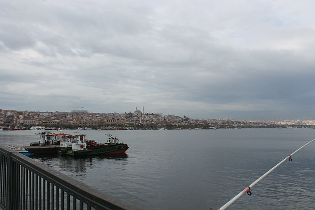 Golden Horn walking