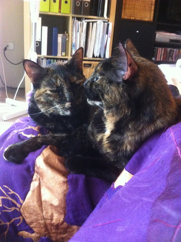 Double trouble on the quilt