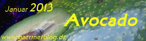 Garten-Koch-Event Januar: Avocado [31.0.12013]