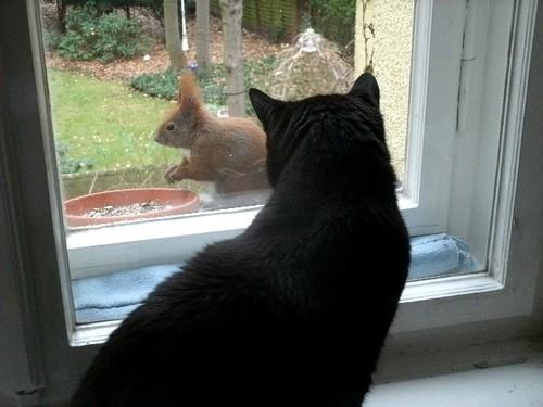 Katze und Eichhörnchen 4