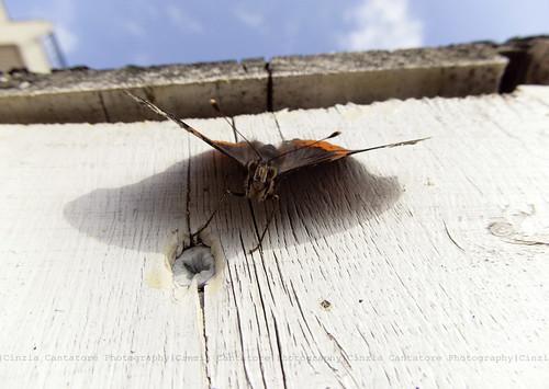 Leggero e silenzioso, come un battito d'ali di farfalla... by [Piccola_iena]