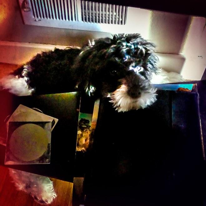 Mojo Gets Warm