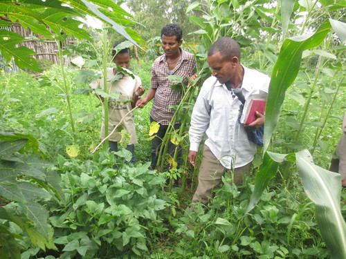 Backyard fodder development with farmers in Limbichoch village