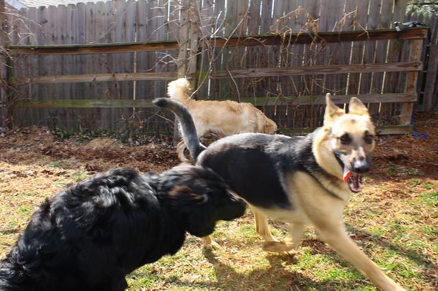 Happy puppy faces