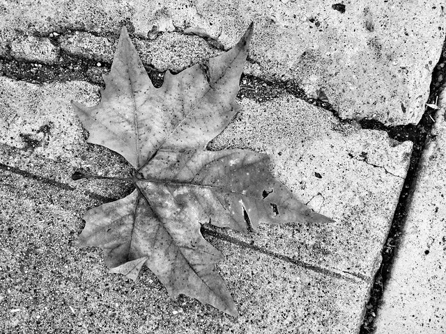 leaf and concrete.