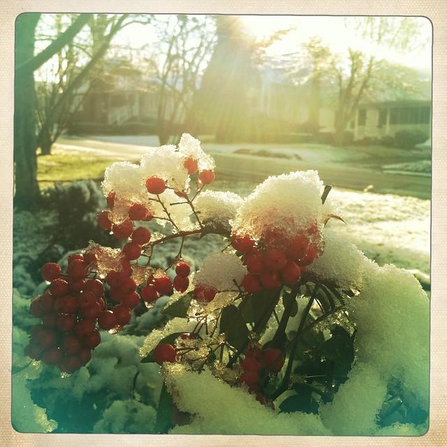SNOW in Winston