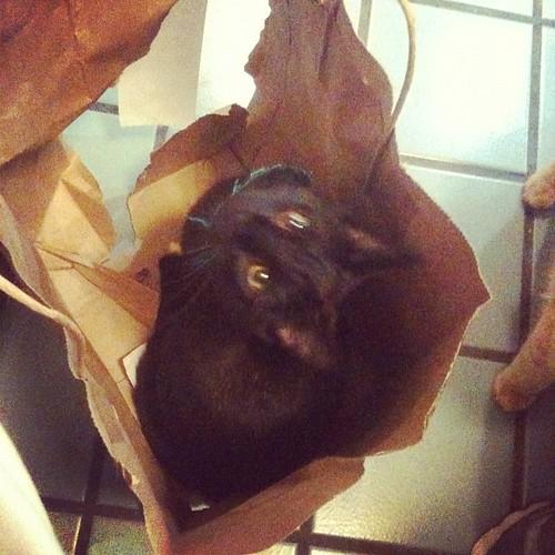 Luna in the Bag