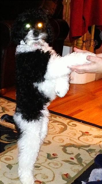 mojo the robot dog