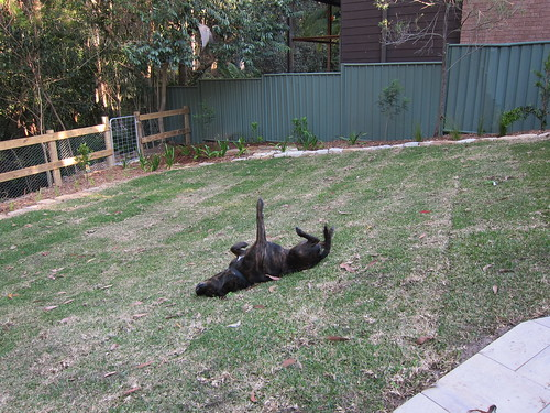 Clara approves of the new grass