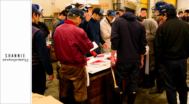 Tsukiji Fish Market Tuna Auction 築地市場