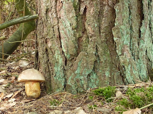 géocache champignon