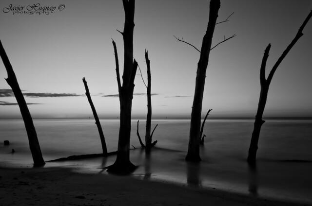 """""""Enjoy the Silent"""" Sarasota-Florida (Explored)"""